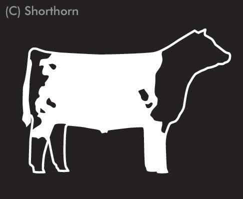 Shorthorn Steer Clipart