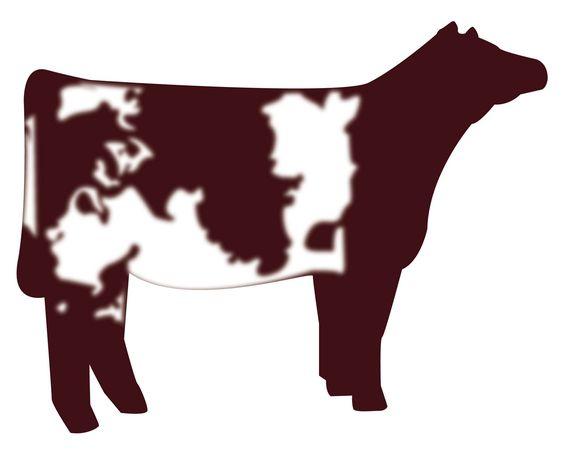 Show Heifer Clip Art | Shorthorn Heifer -show heifer clip art | Shorthorn Heifer vector graphic-15