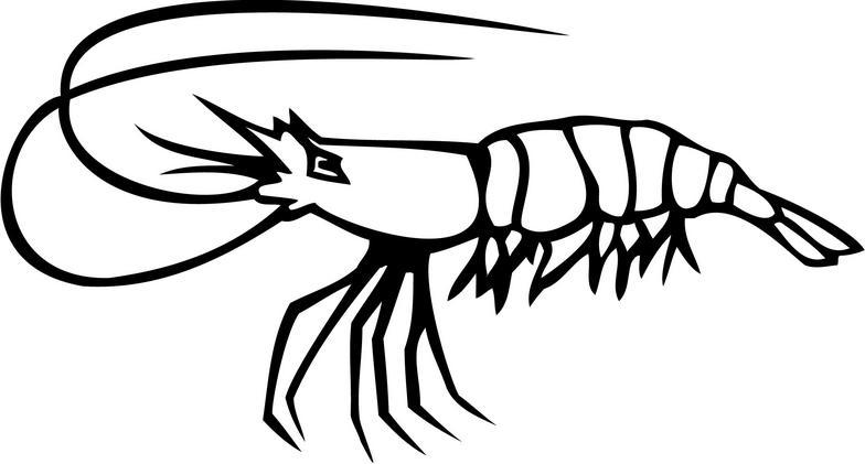 Shrimp Boil Clipart Kid-Shrimp boil clipart kid-13