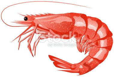 Shrimp Clip Art-shrimp clip art-15