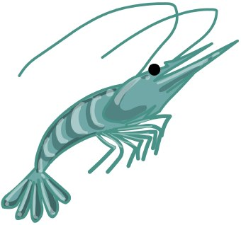 Shrimp clipart kid 2-Shrimp clipart kid 2-15