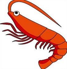 Shrimp-shrimp-16