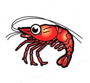 Shrimp-shrimp-18