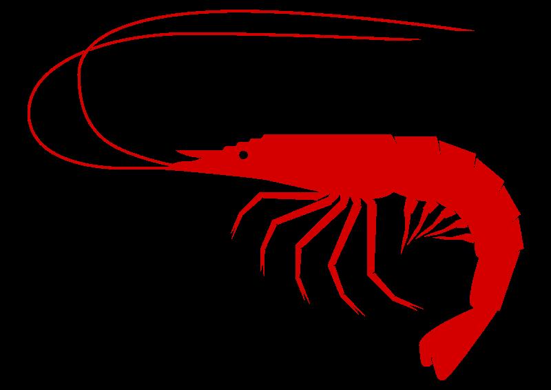Shrimp-shrimp-19