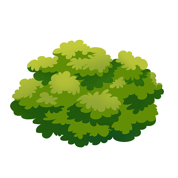 Bush Vector Art Illustration-Bush vector art illustration-6