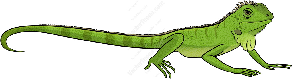 Side view of a green iguana cartoon clip-Side view of a green iguana cartoon clipart-14