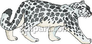Side View of a Snow Leopard - - Snow Leopard Clipart
