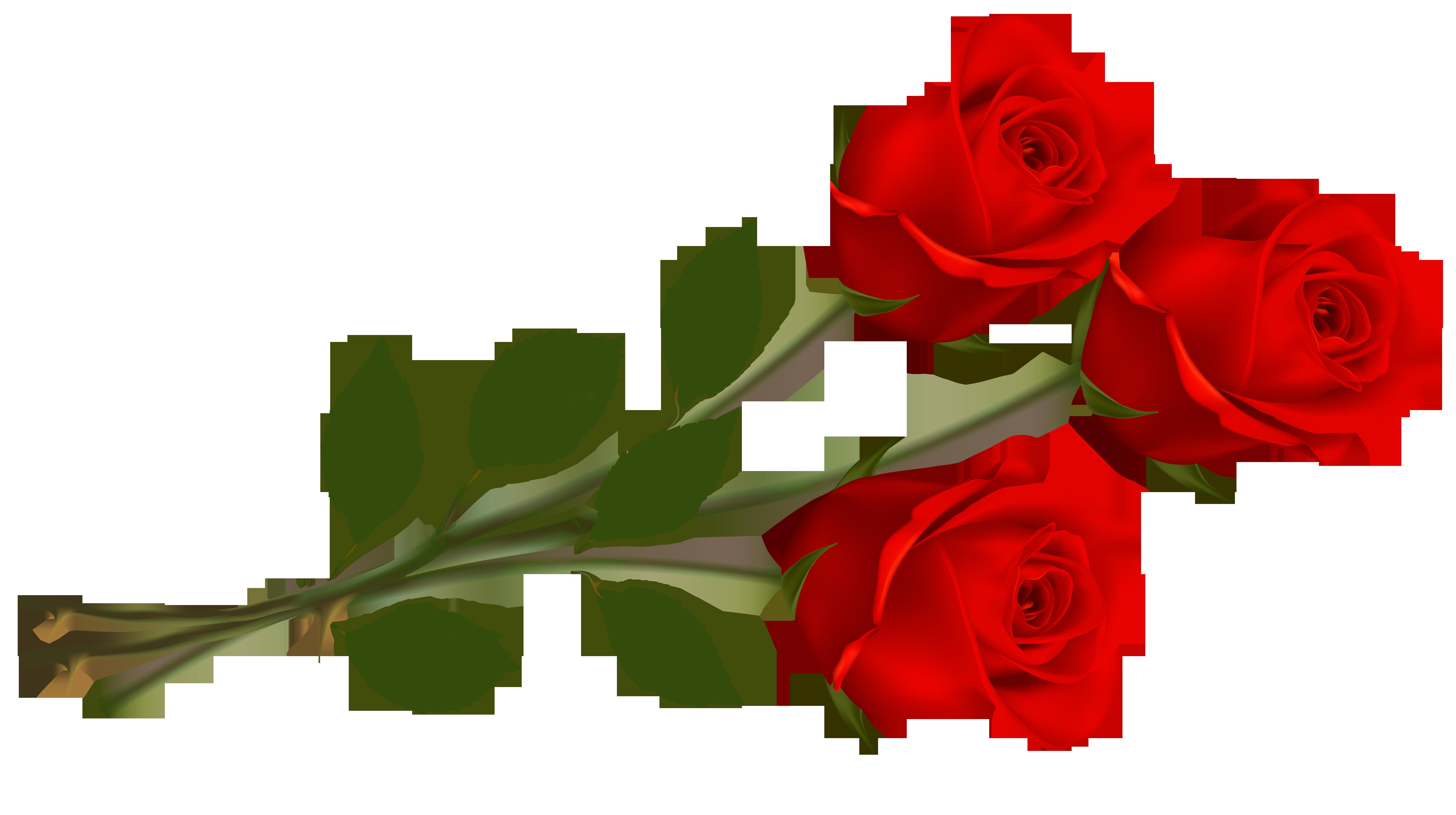 Single Red Rose Clip Art. 499337e244c631-Single Red Rose Clip Art. 499337e244c63137fac26c208707e6 .-15