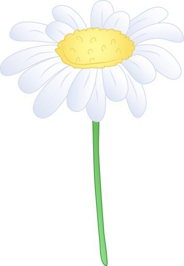Single White Daisy Flower - Free Clip Art