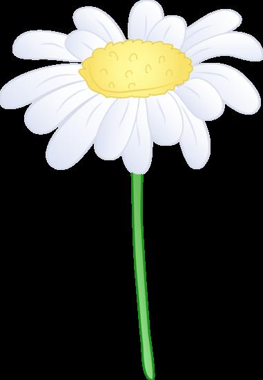 Single White Daisy Flower - Free Clip Ar-Single White Daisy Flower - Free Clip Art-18