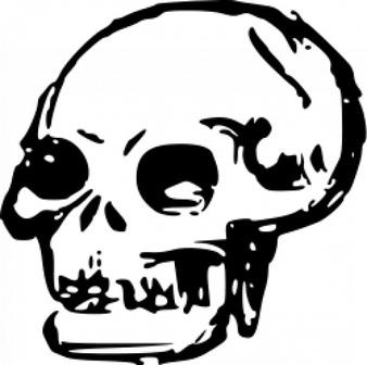 Skull hand drawn 2