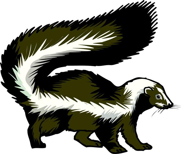 Skunk-clipart- Bar Clipart-skunk-clipart- Bar Clipart-10
