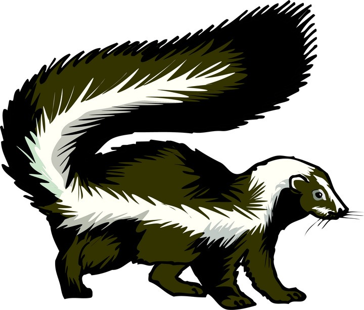 skunk-clipart- Bar Clipart-skunk-clipart- Bar Clipart-13