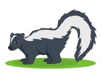 Skunk Clipart Size: 56 Kb-Skunk Clipart Size: 56 Kb-13