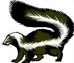 Skunk-Skunk-15
