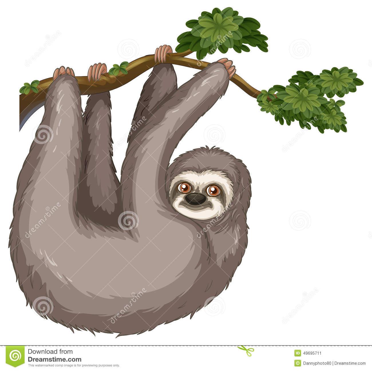 Sloth-Sloth-18