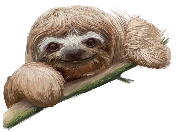 Sloth transparent images all clip art-Sloth transparent images all clip art-17