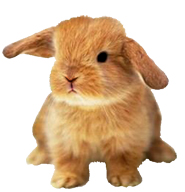 ... Small Evil Easter Bunny Clipart-... small evil Easter Bunny clipart-17