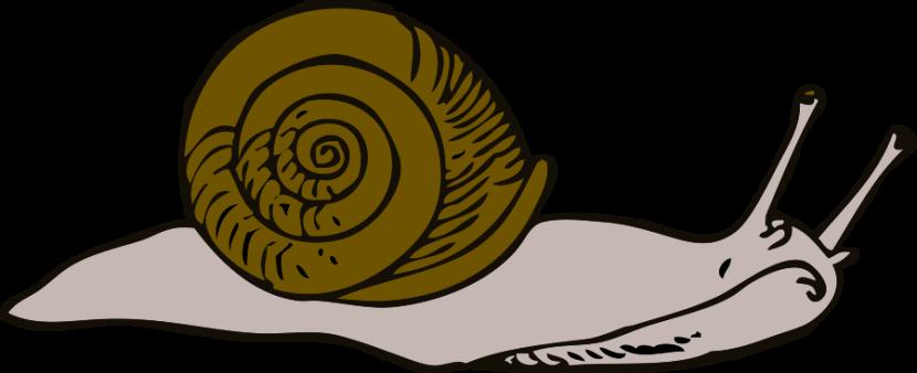 Snail Clip Art-Snail Clip Art-12