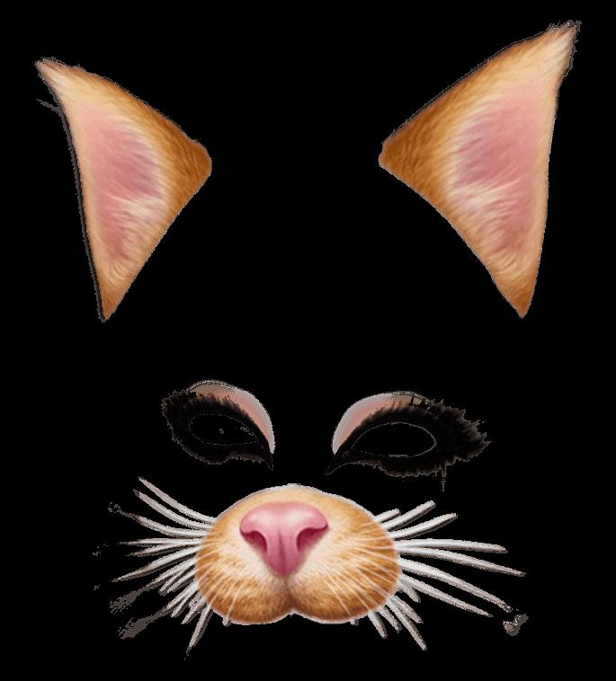Snapchat Filter Brown Cat-Snapchat Filter Brown Cat-12