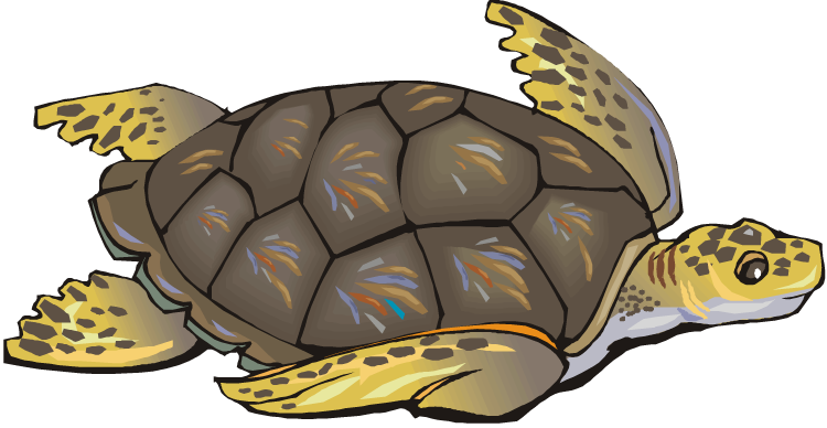 Snapping Turtle Clip Art Sea Turtle