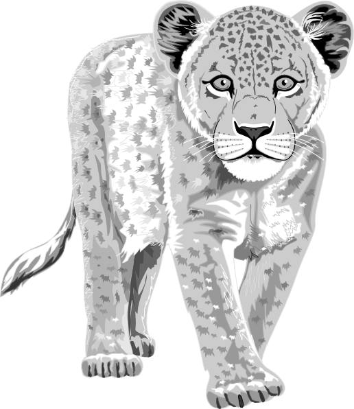 Snow Leopard Drawing Clipart. - Snow Leopard Clipart
