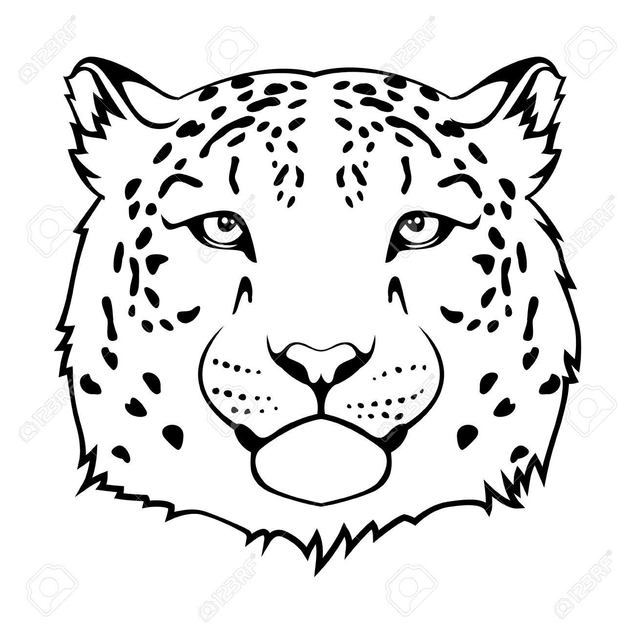 snow leopard: Snow leopard s head isolated on white Illustration