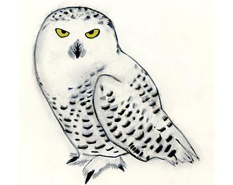 Snowy Owl Art I - Owl Art .-Snowy Owl art I - Owl art .-11