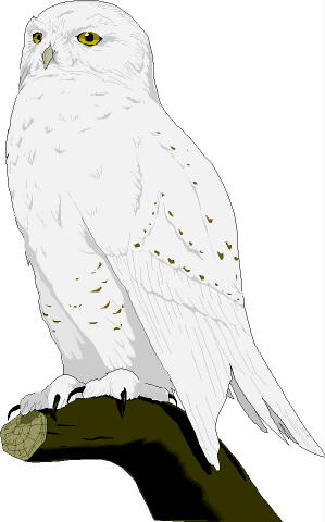 Snowy Owl Clip Art. 1000  Images About S-Snowy Owl Clip Art. 1000  images about Snowy Owl ..-12