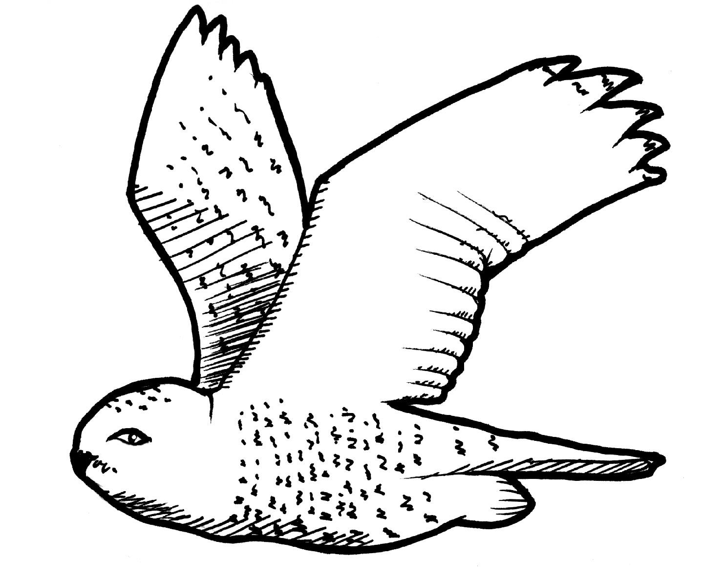 Snowy Owl Clip Art Snowy .-Snowy Owl Clip Art Snowy .-16