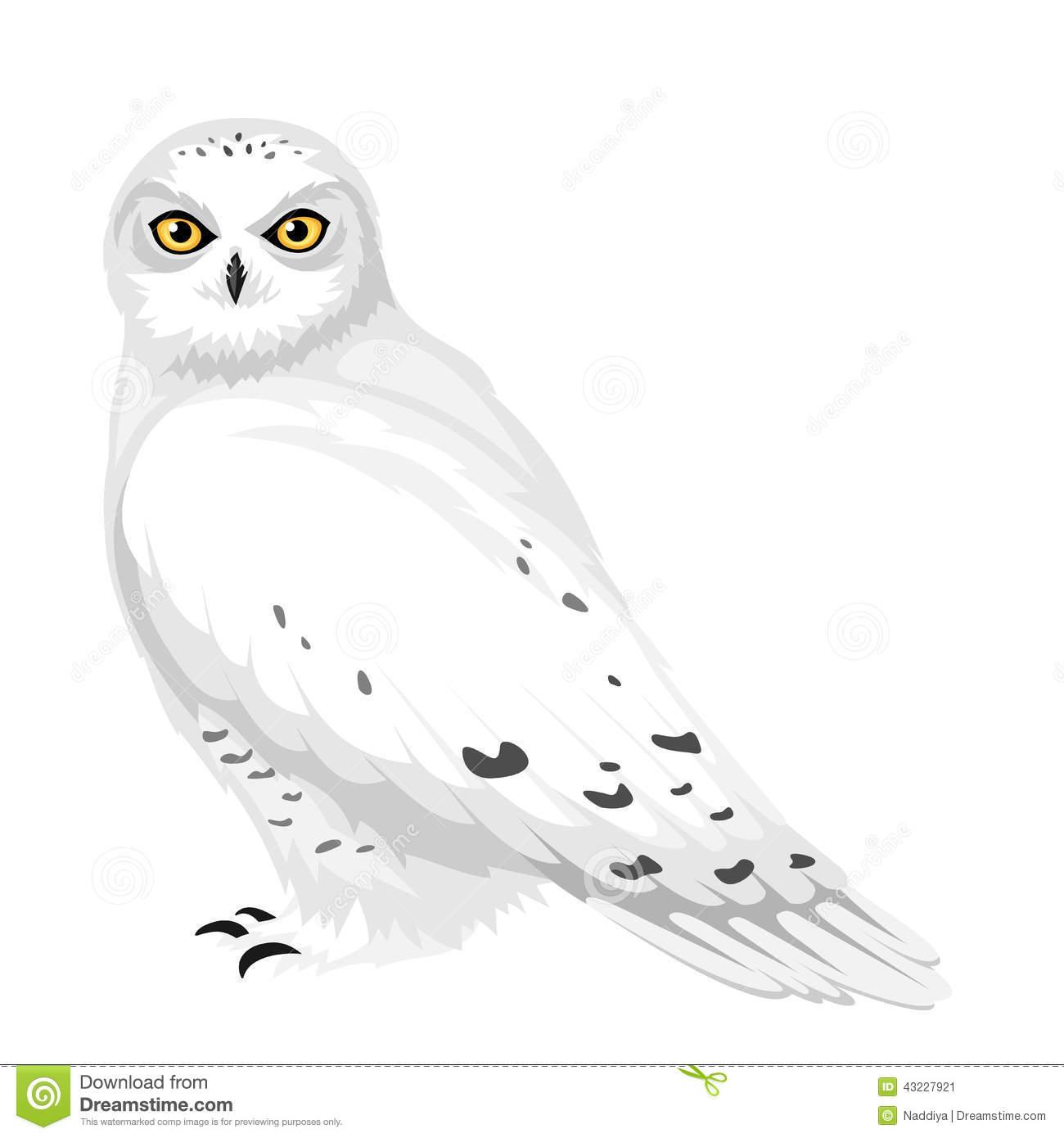 Snowy Owl Vector Illustration Stock Vect-Snowy Owl Vector Illustration Stock Vector Image 43227921-19
