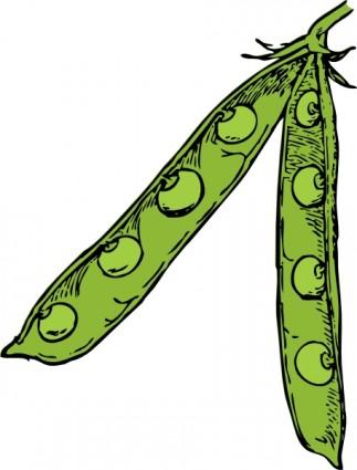 Soybean Clipart