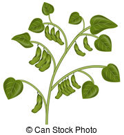 Soybean Plant - An image of a soybean pl-Soybean Plant - An image of a soybean plant.-13
