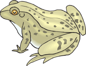Speckled Frog Clip Art. Toad Clipart Image
