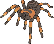 Spider on a web. Size: 98 Kb