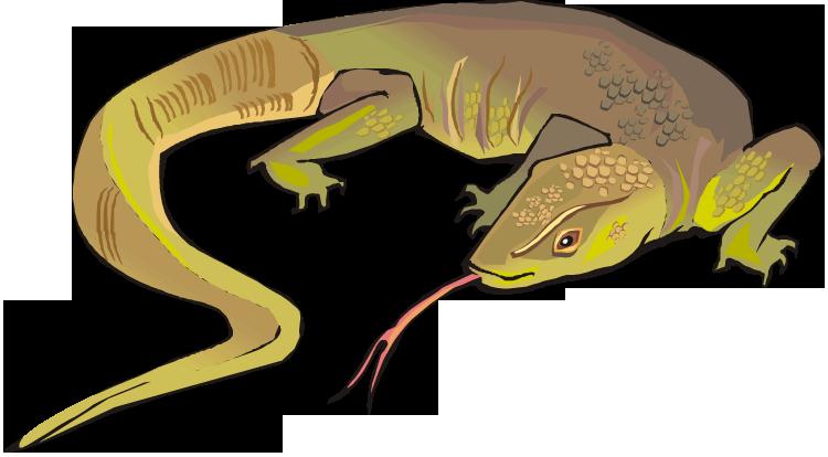Split Tongue Lizard