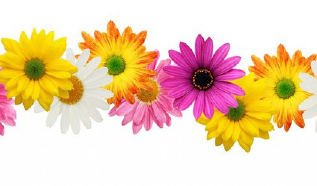 44 Floral Border Clipart Clipartlook