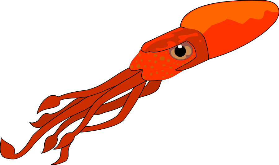 Download Squid Marine Life Bl