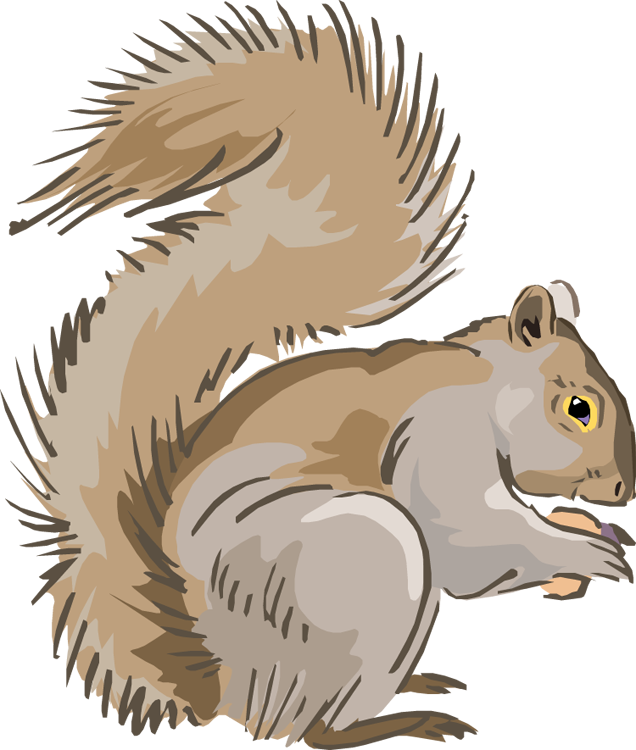 Squirrel Clipart Hungry Squirrel