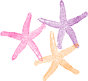 Starfish Clip Art-Starfish Clip Art-15