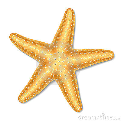 Starfish Stock Illustrations u2013 13,910 Starfish Stock Illustrations, Vectors u0026amp; Clipart - Dreamstime