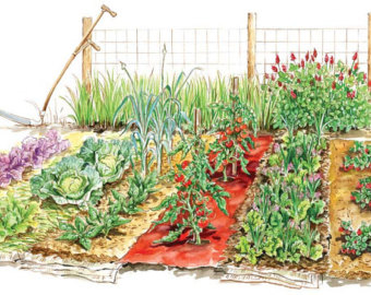 Starter Garden Seed Kit .-Starter Garden Seed Kit .-15