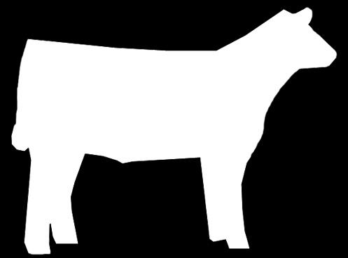 Steer 3 Large