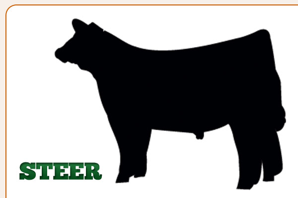 Steer Outline Clipart Cliparthut Free Clipart