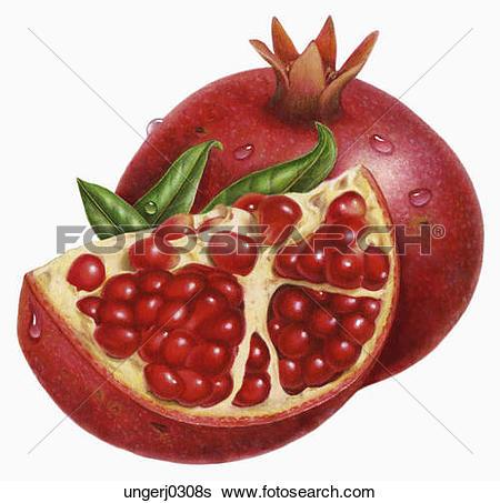 Stock Illustration - Pomegranate. Fotosearch - Search Clip Art, Drawings, Fine Art Prints
