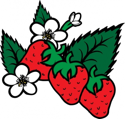 strawberry vine clipart