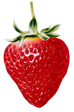 73 best 06 - Strawberry Clipart u0026 Printables images on Pinterest in 2018 | Strawberry  clipart, Strawberries and Strawberry fruit