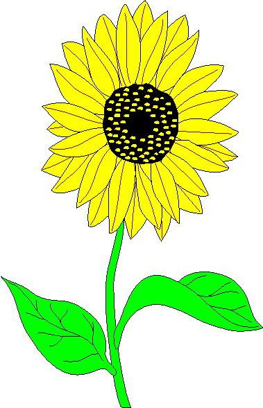 Sunflower clip art - Sun Flower Clip Art