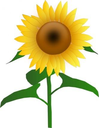 Sunflower Clip Art-Sunflower Clip Art-11