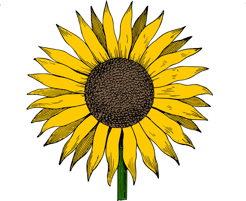 Sunflower clipart clipart cli - Sun Flower Clip Art